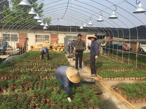 8、仓前物业绿化部自主培育的近10多万盆草花,是学校各景点花境的主力军